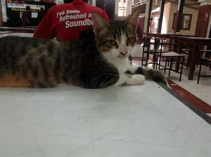 Kucing, Nantang